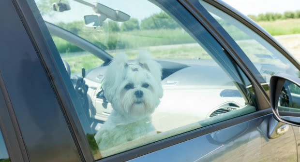Donos continuam a considerar seguro deixar animais dentro do carro