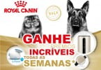 Royal Canin oferece prémios com gama Breed