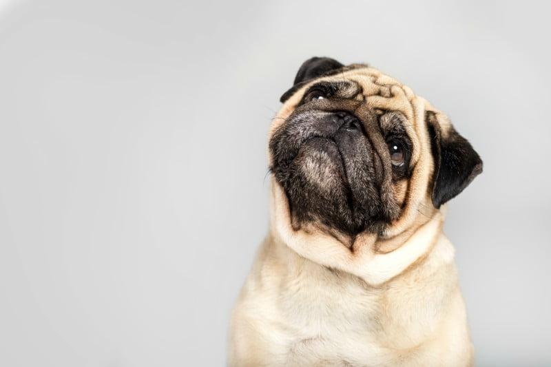 'Give hugs, not pugs': BVA alerta consumidores e retalhistas