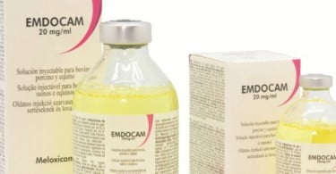 DFV® lança EMDOCAM 20 mg/ml Solução Injetável e PRACETAM 200 mg/ml Solução Oral