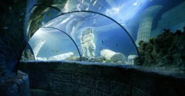 Sea Life Porto mostra bastidores a 27 de setembro