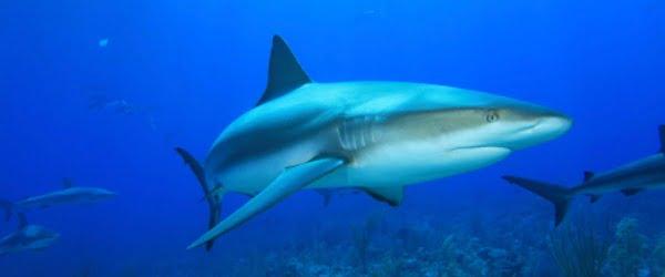 SEA LIFE Porto com Semanas do Tubarão