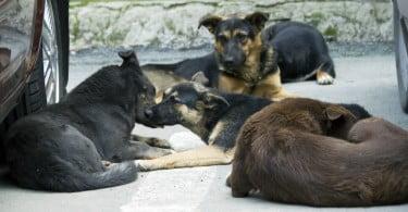 Marcha por nova lei de proteção dos animais