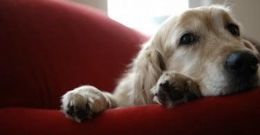 Ter cães no local de trabalho ajuda a aliviar stresse