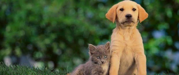 Aprovada criminalização de maus tratos a animais domésticos