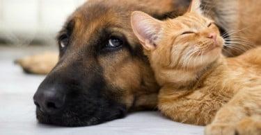 Doenças infecciosas em cães e gatos estão a aumentar
