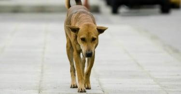 OMV lança Campanha Nacional de Esterilização de Animais Errantes