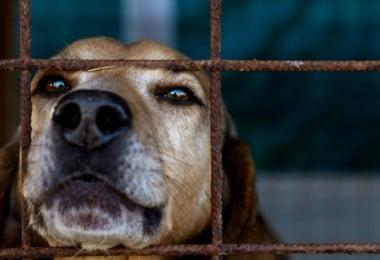 Parlamento aprova criminalização de maus tratos a animais de companhia