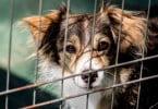 PAN quer acabar com abate de animais em canis