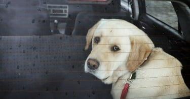 Lusitania aumenta oferta de seguros para animais de companhia