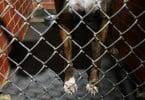 DGV confirma utilização de cães do canil de Évora como cobaias