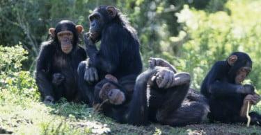 Macacos reagem a situações de injustiça