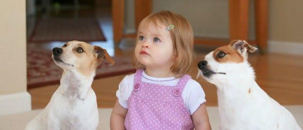 Ter cães em casa pode oferecer proteção contra a asma