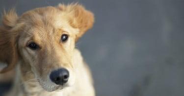 Criado teste para detetar osteoartrite canina