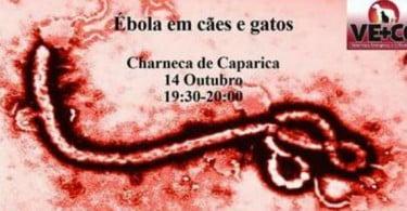 Palestra sobre ébola em cães e gatos