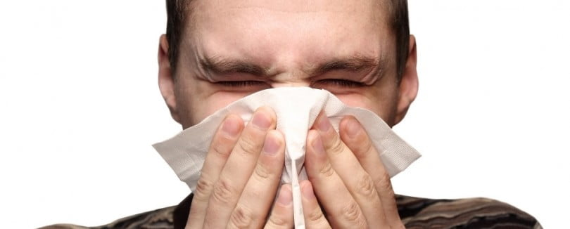Descoberta vacina que cura alergia a gatos