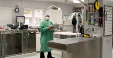 Novos recursos online de medicina baseada na evidência para veterinários