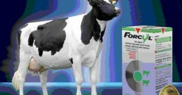 Vetóquinol lança Forcyl 50ml