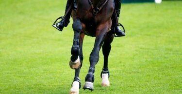 cavalo corridas de cavalos