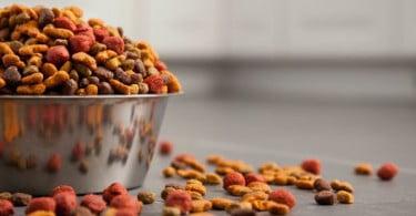 Dieta à base de leguminosas e Cardiomiopatia Dilatada Canina: FDA explica porque podem estar relacionadas