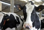 Bayer lança APP para avaliação da condição corporal em bovinos