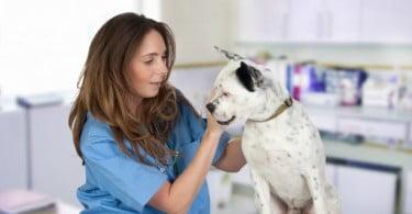 Será que Veterinários e donos de animais de companhia falam diferentes línguas?