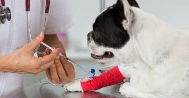 masterclass de ortopedia