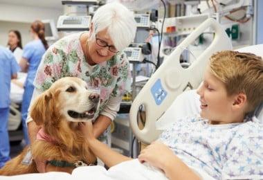 cão terapeuta