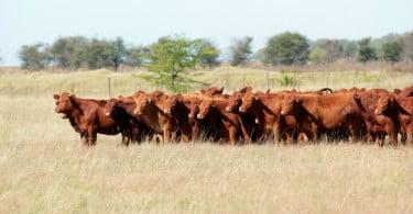 Governo brasileiro deverá rever regras para exportação de animais vivos