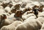 OMV quer repovoar com animais zonas afetadas pelos incêndios