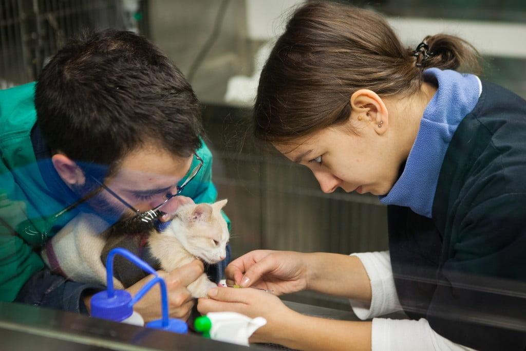 veterinários montenegro