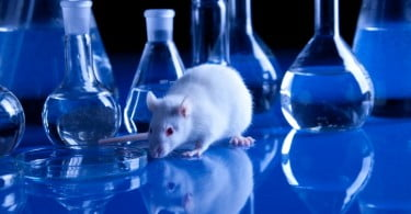 Sociedade de Ciências em Animais de Laboratório pede fiscalização no cumprimento das normas