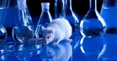 rato de laboratório - VET