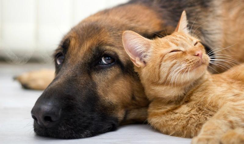 5 recomendações para detentores de animais em tempo de quarentena