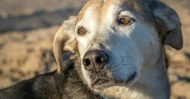 Vetoquinol financia estudos sobre osteoartrite canina