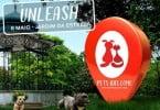 festival urbano para cães