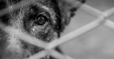 Apenas 5% das denúncias de maus-tratos a animais chegam a julgamento