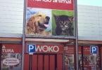 Kiwoko - lojas de animais - Veterinária Atual