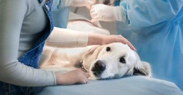 cão no veterinário Veterinária Atual
