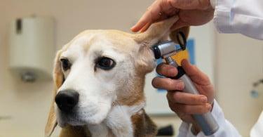 especialidades veterinárias