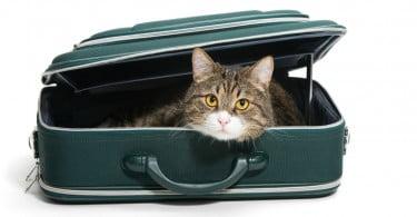 gato numa mala de viagem