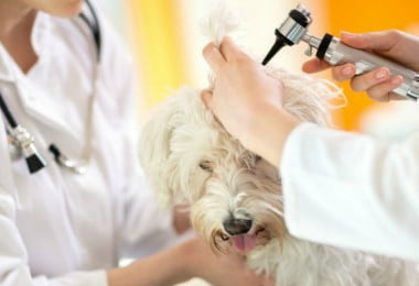 medicina veterinária - Veterinária Atual
