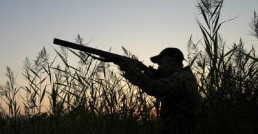caçador - Veterinária Atual