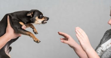 Comportamento Animal - Especial Comportamento - Veterinária Atual