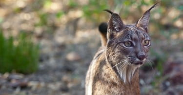 Projeto nacional quer combater envenenamento de animais selvagens