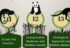 Congresso Internacional Fauna - FMVUL - Veterinária Atual