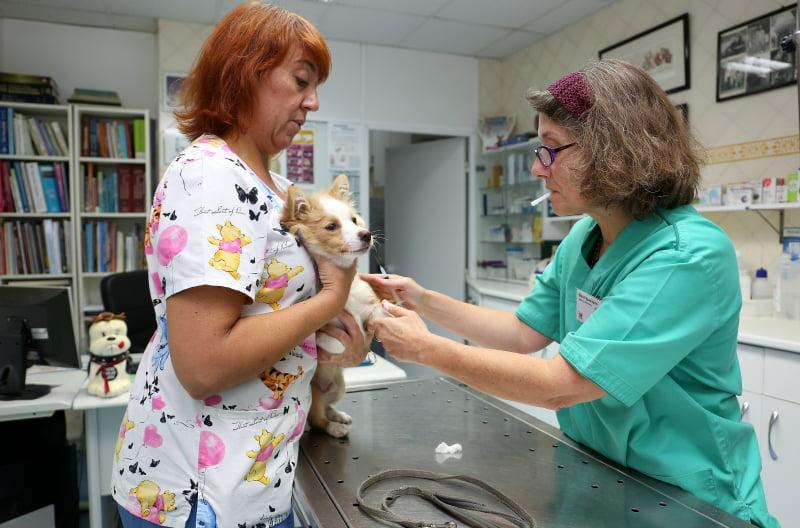 clinica-vet-corroios1-veterinariaatual