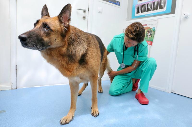 clinica-vet-corroios3-veterinariaatual