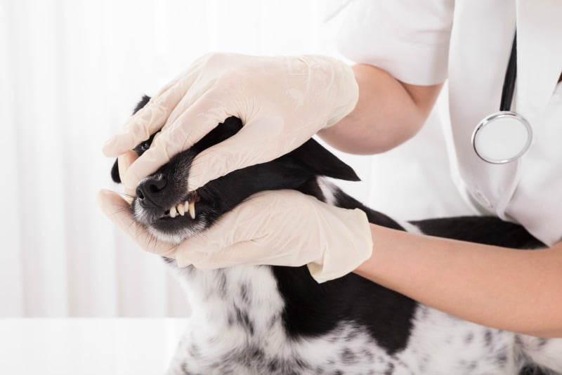 Mercado de material odontológico veterinário deverá crescer 7,7% até 2026