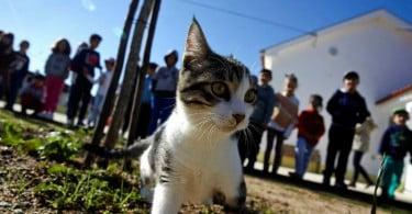 Didi - gato adotado em Coimbra - Veterinária Atual